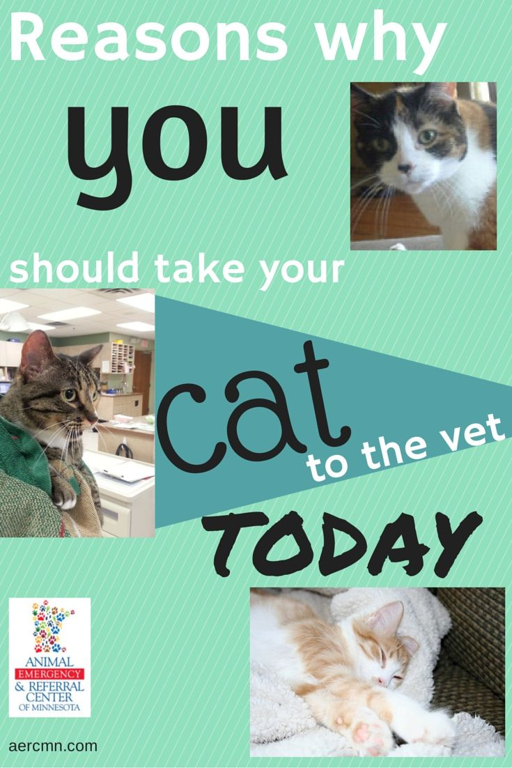 Has Your Cat Been To The Vet Lately Vets City Pets Animal Hospital