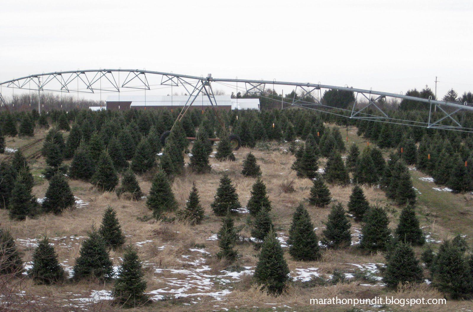 Photos Michigan S Orchards Vineyards And Christmas Tree Farms In Winter Christmas Tree Farm Tree Farms Michigan