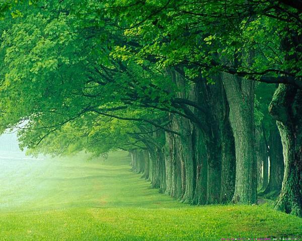 Beautiful Green Forest Background Green Nature Wallpaper Nature Desktop Hd Nature Wallpapers