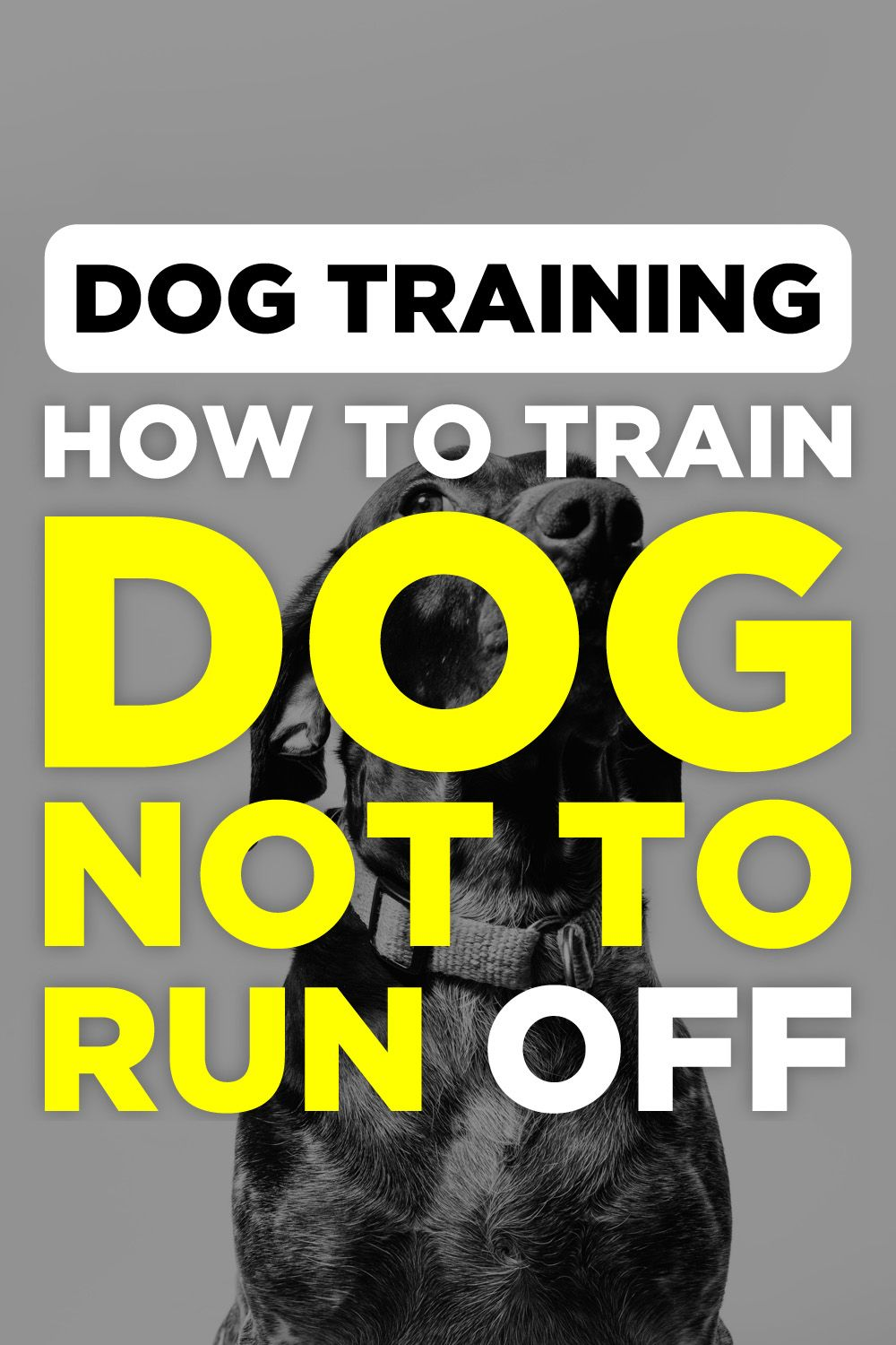 Brain Training For Dogs Review Labrador Puppy Training Dog