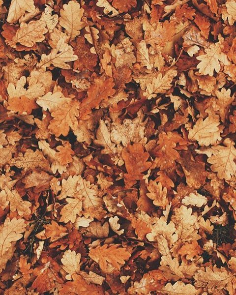 See This Instagram Photo By Cozy Fall 112 Likes Fall Wallpaper Fall Background Fall Backgrounds Tumblr