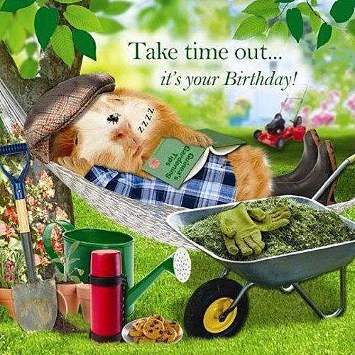 Garden Hammock Funny Birthday Card Afternoon Snooze Guinea Pig Gardening Mower Pinterest