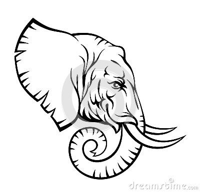 Elephant Head By Skalapendra Via Dreamstime Elephant Drawing Elephant Clip Art Elephant Head Drawing
