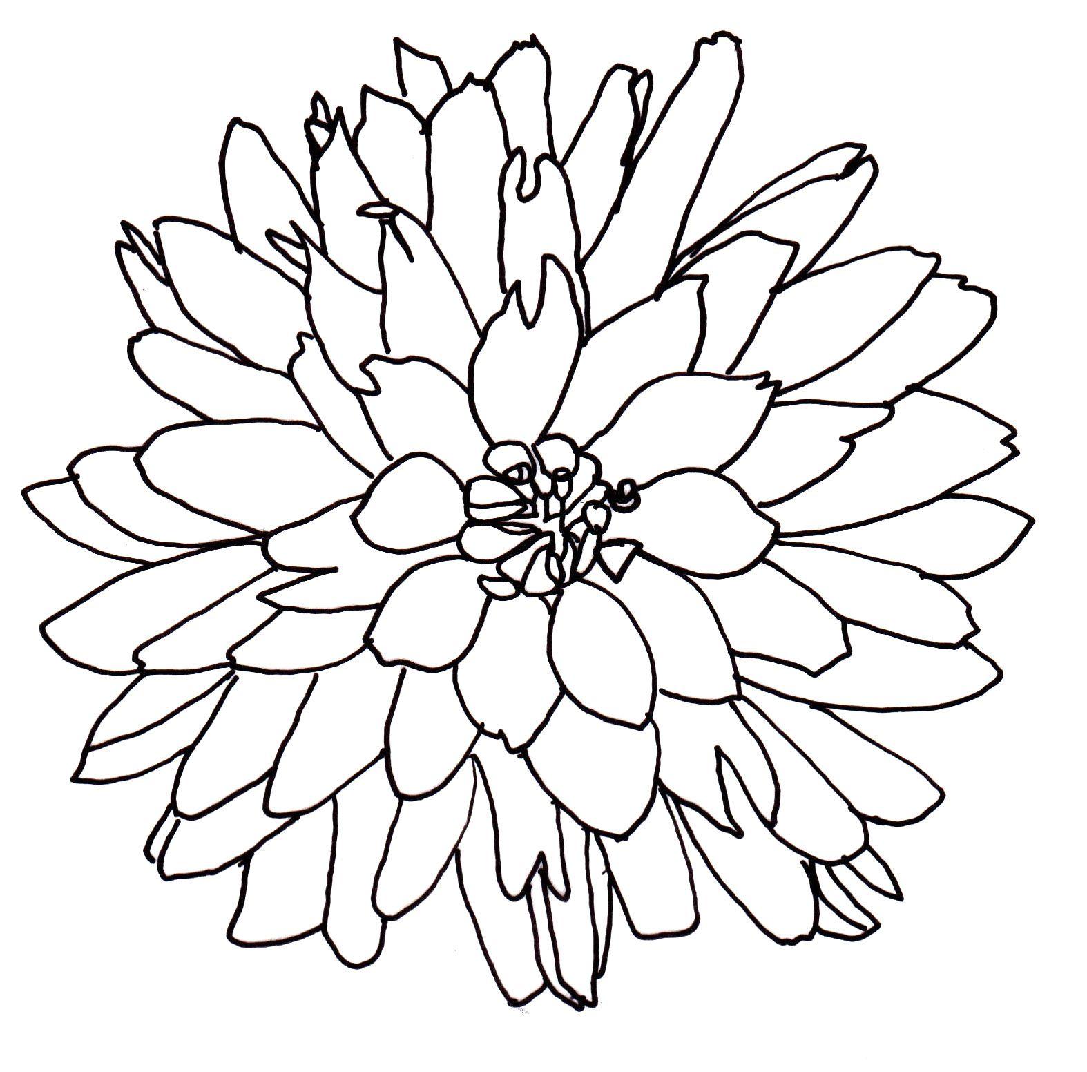 Line Drawing Flowers Dahlia Flower Line Drawings Flower