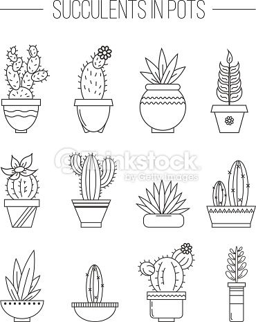 Set Of Succulent Plants And Cactuses In Pots Linear Botanical Vector Dessin Plante Dessin Dessins Faciles
