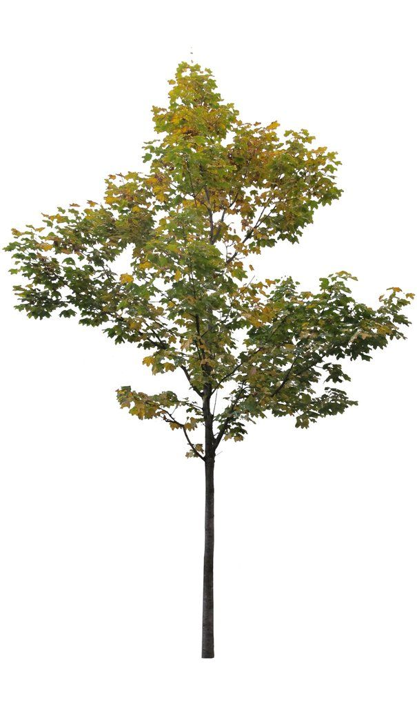 50++ Trees photoshop ideas in 2021