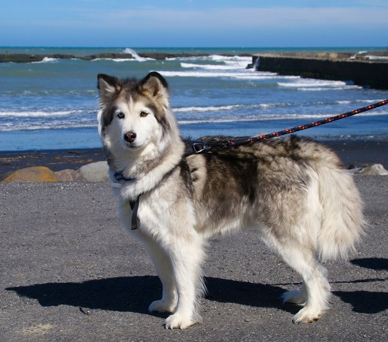 I want THIS doggy!