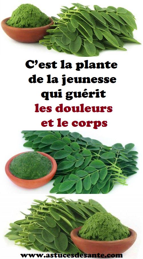 C'est la plante de la jeunesse qui guérit les douleurs et le corps #plantedelajeunesse #douleurs ...