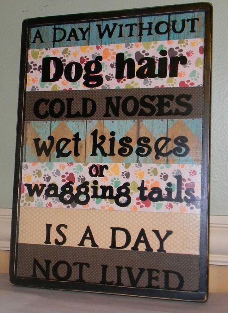 dog room makeover dogroommakeover Dog grooming salons