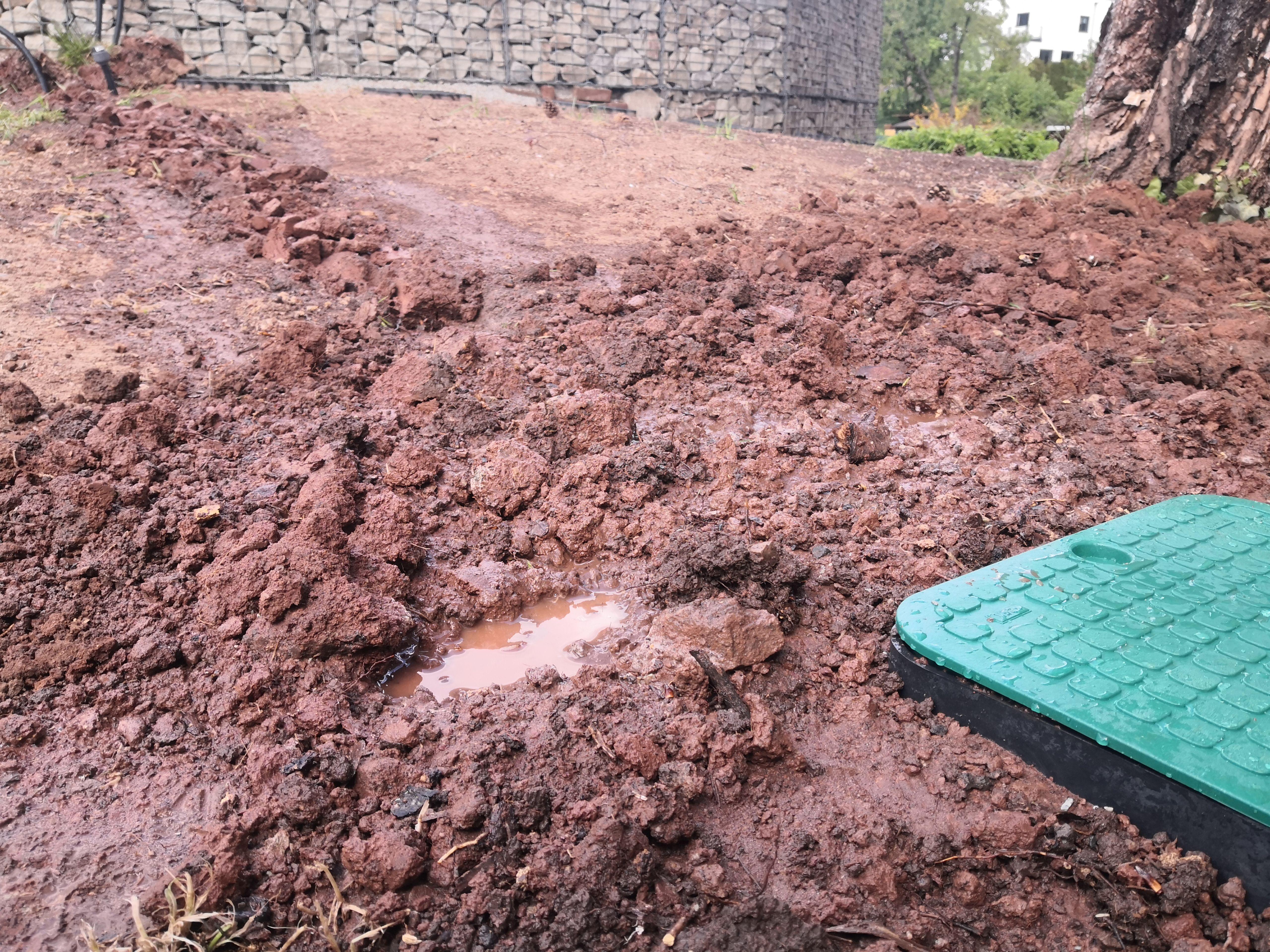 Automatische Heckenbewasserung Selber Bauen Vor Gut 10 Jahren Habe Ich Auf Der Sudseite Unseres Bewasserung Automatische Bewasserung Garten Bewasserungsanlage