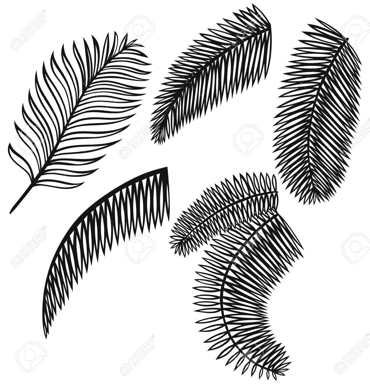 Palmier dessin ensemble de feuilles de palmier isol sur fond blanc illustration pinterest - Dessin palmier ...