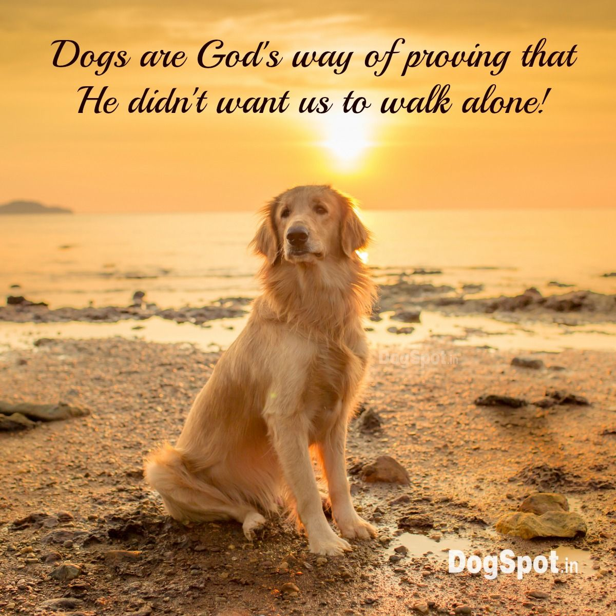 Quotes About Dogs Golden Retriever  Noble Loyal Companions  Pinterest  Dog Animal
