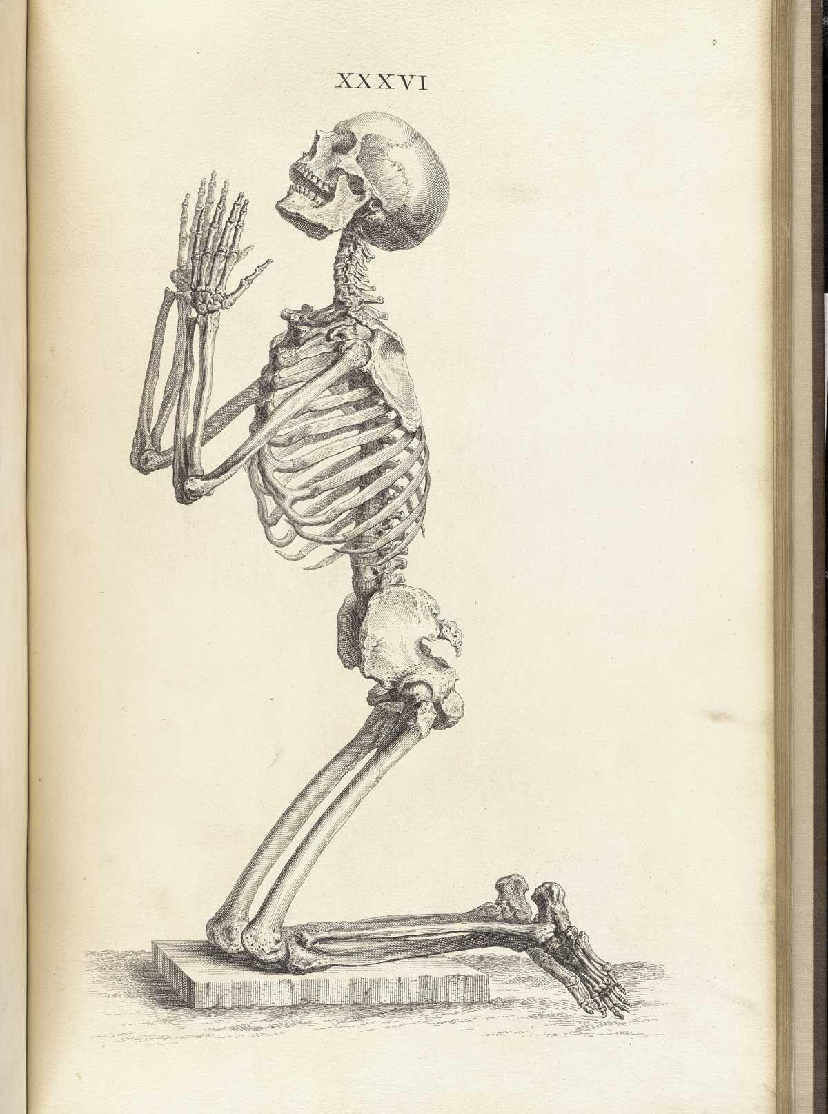 7 inquietantes ilustraciones anatómicas de la antigüedad | skulls ...