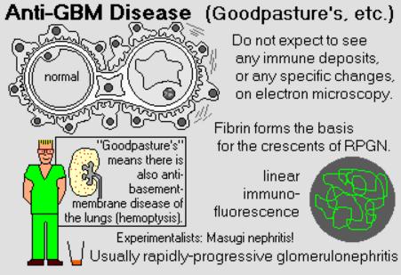Pin By Mohammed Sfia On Medicine Basement Membrane Medical Mnemonics Disease