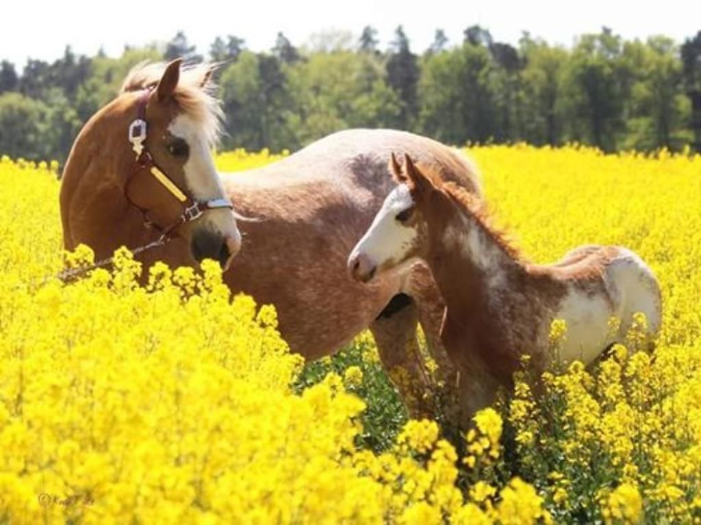 Pferde Ebay Kleinanzeigen Kaufen