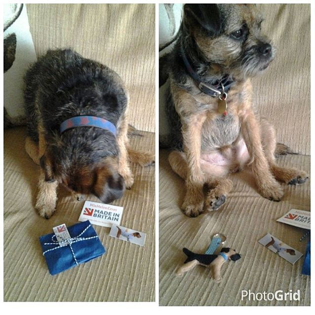 Blue Tan Border Terrier Woody Inspects His New Keyring From Www