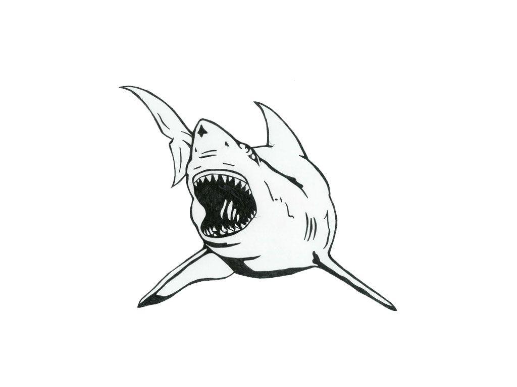 Free Sharkdrawing Free Designs