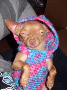 Crochet Chihuahua Puppy Sweater Dog Sweater Crochet Pattern Dog