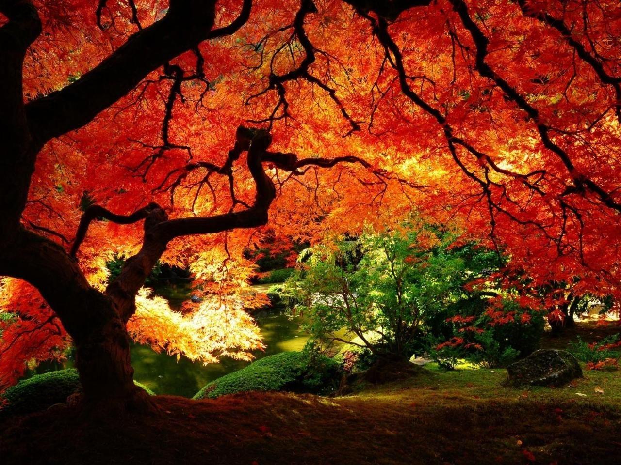 ősz 4
