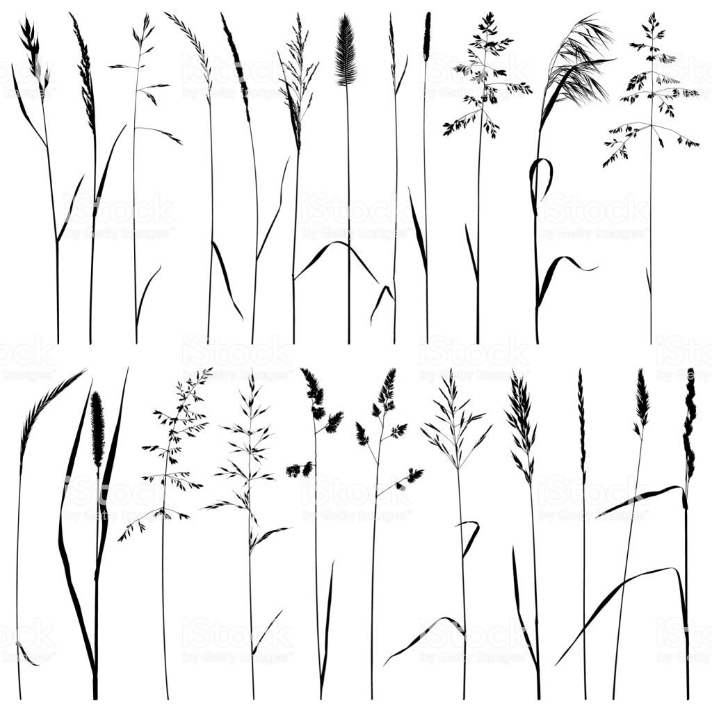 Photo of Set of plant silhouettes. Meadow grass, dry ears of grass. Detailed…