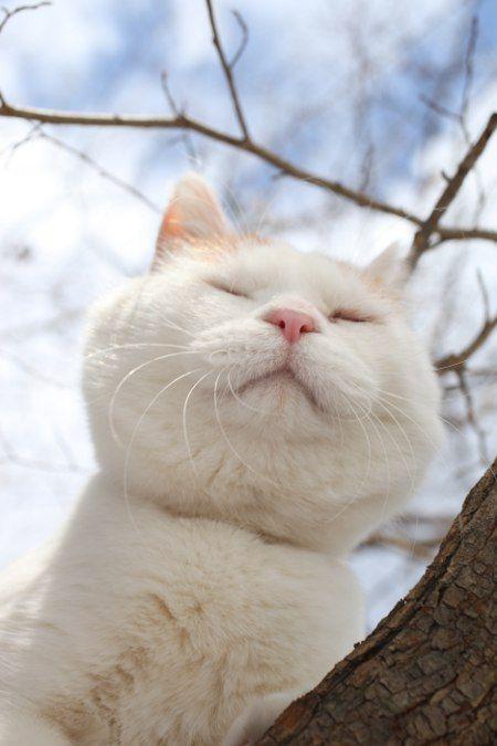 かお   かわいい貓、動物 かわいい、かわいい子貓