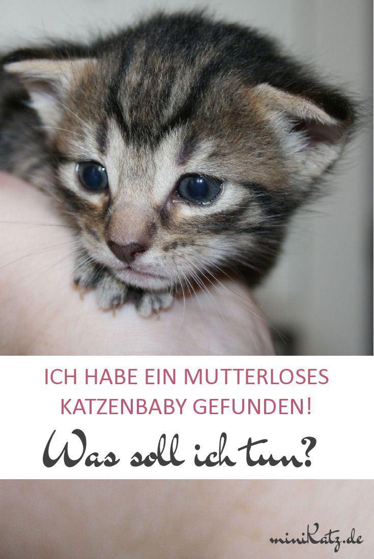 Erste Hilfe Bei Fundkatzchen Baby Katzen Katzen Und Katzen Alter