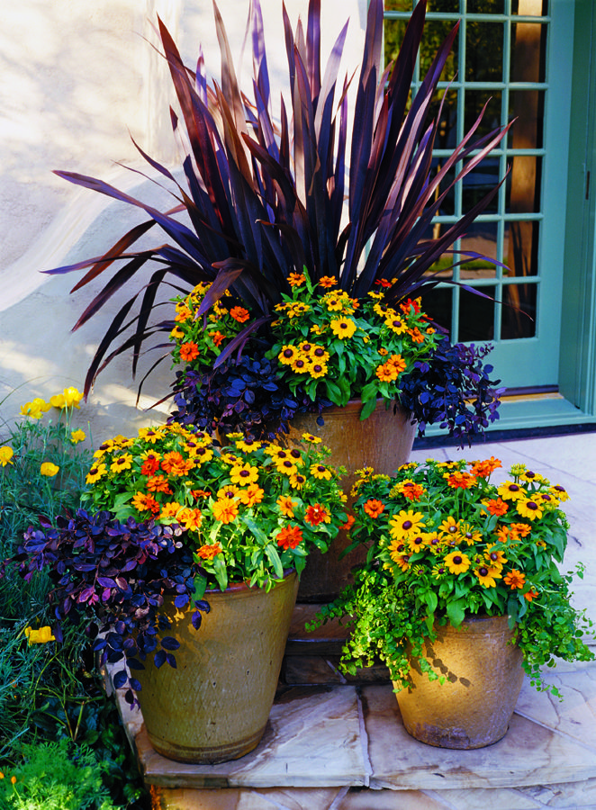 Fall ensemble low maintenance plants balconies and porch - Potted autumn flowers ...
