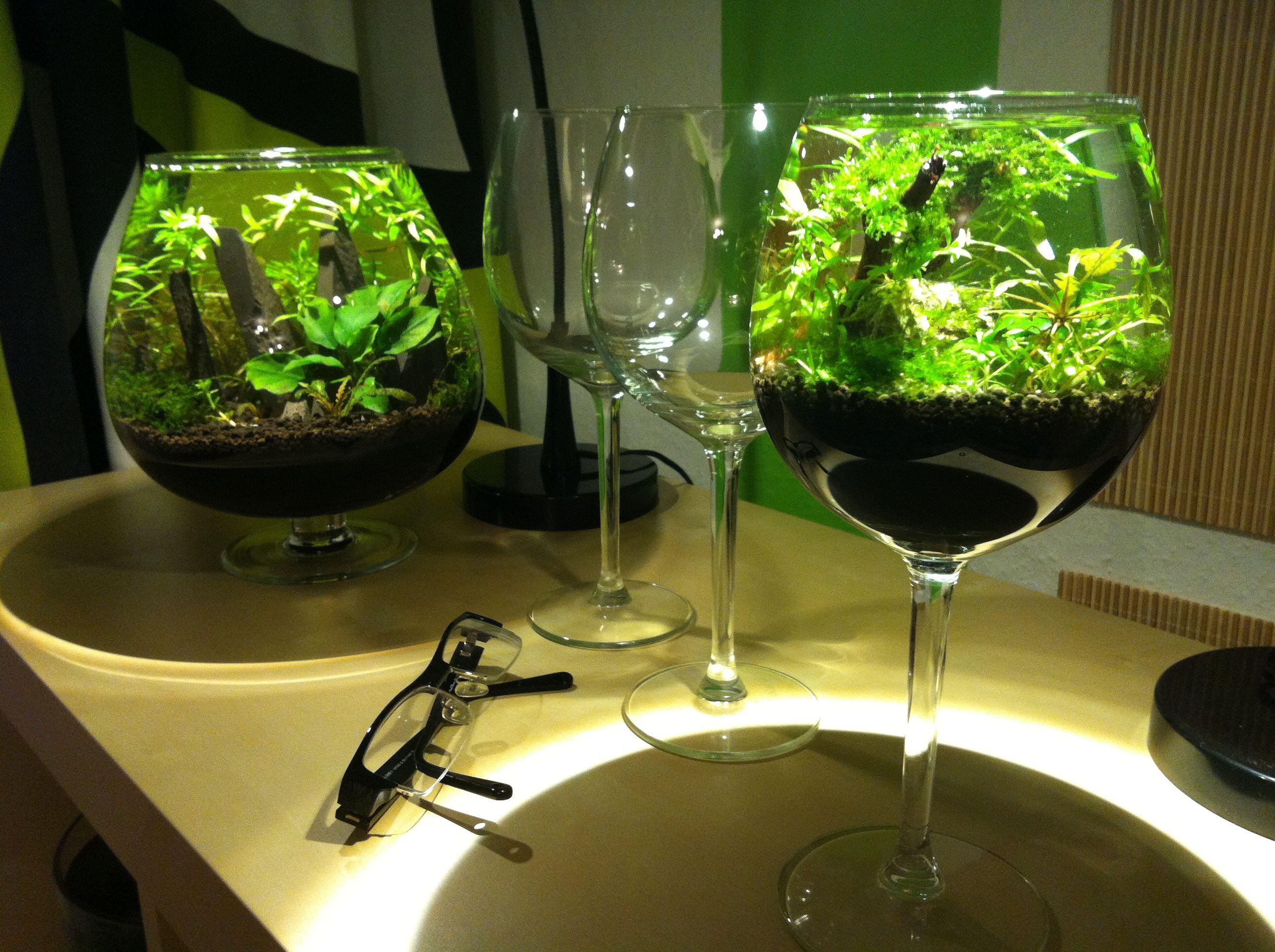 Miniscapes und l aquascaping aquascaping pinterest