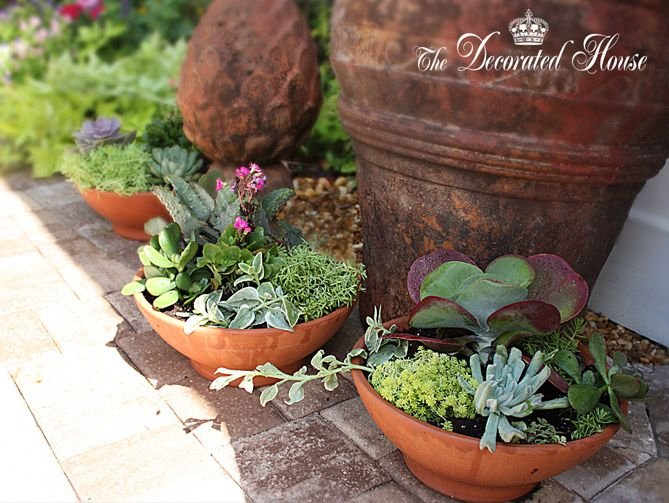 The Decorated House:~ How To Create A Succulent Dish Garden ~ Tutorial