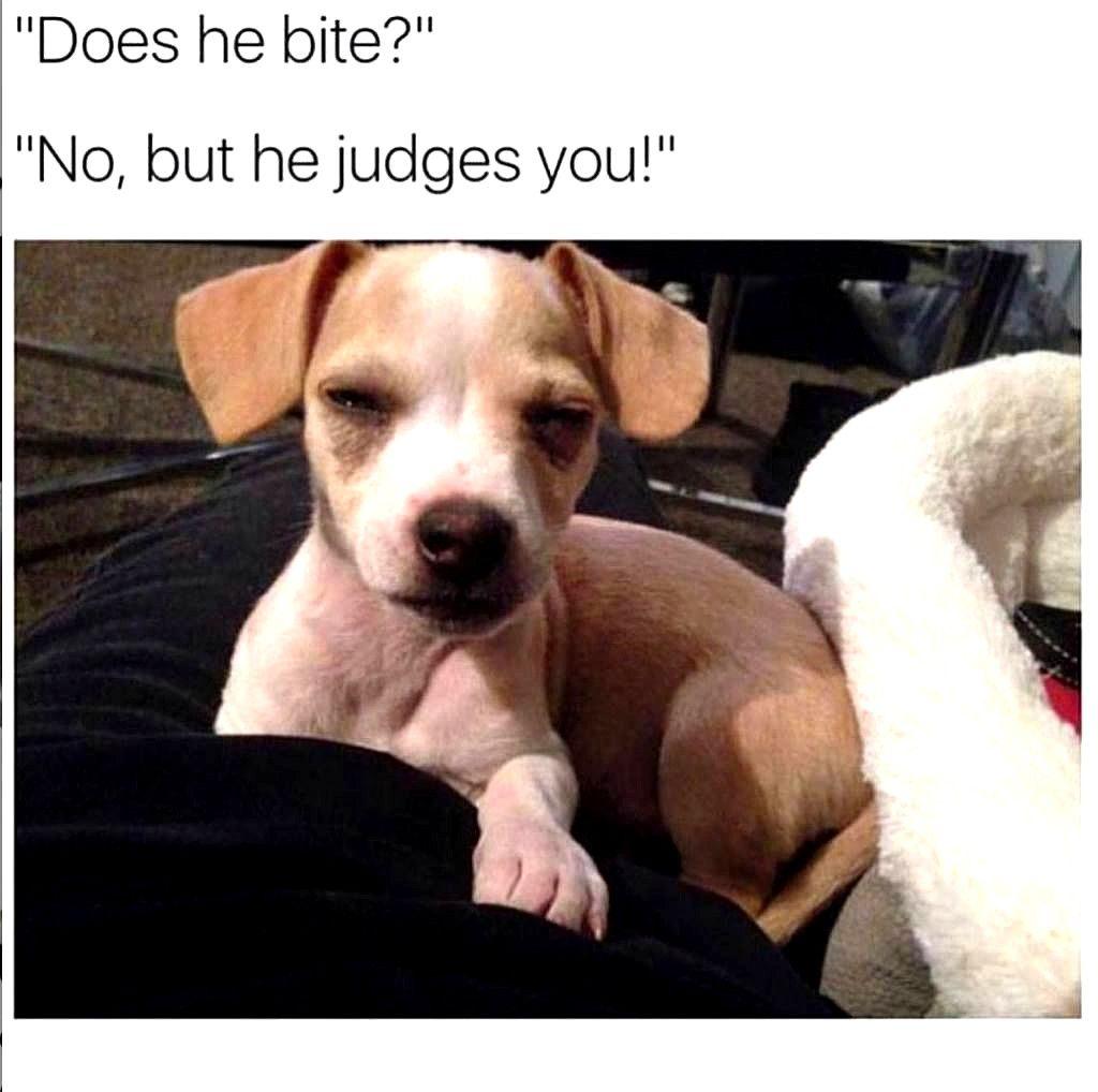 Bahahahaha Dog Memes So Funny Dog Meme Miss You Dog Quotes Funny Funny Animals Cute Funny Animals