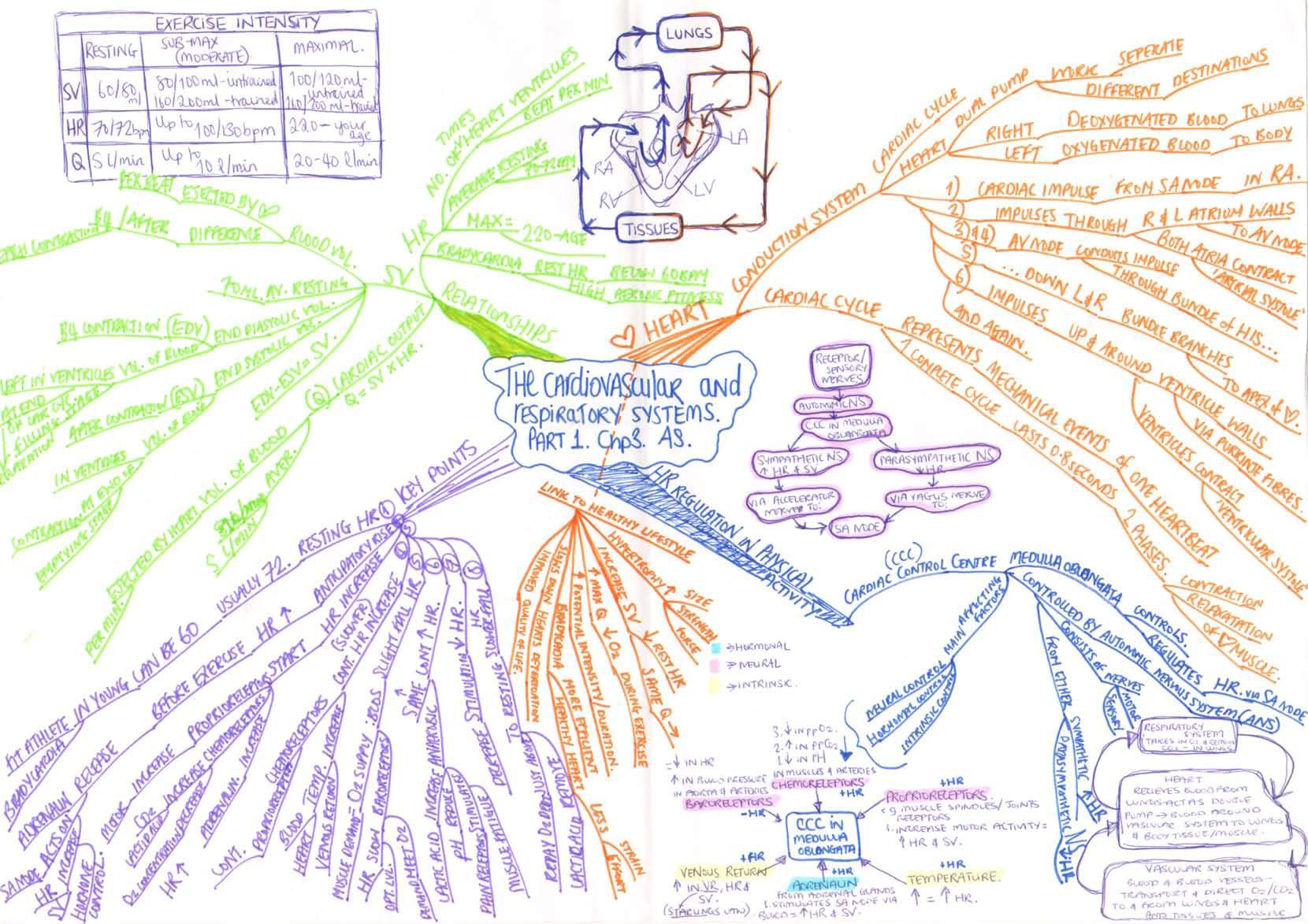 Respiratory System Concept Map