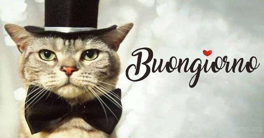 Immagini Buongiorno Buffe E Divertenti Con Gatti Buongiorno