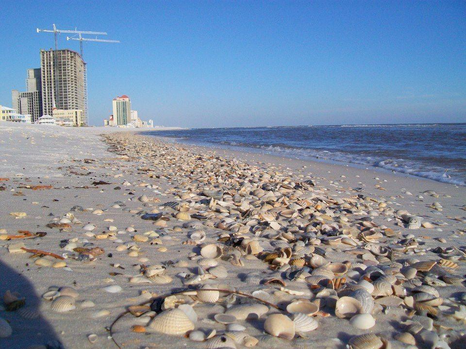 Shells Shells Everywhere Seashells Gulfshores Orangebeach