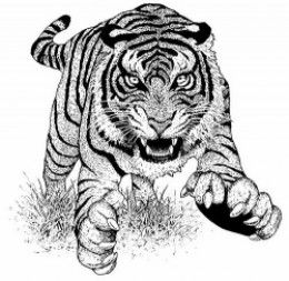 tigers and chetas coloring printables tigers coloring pages