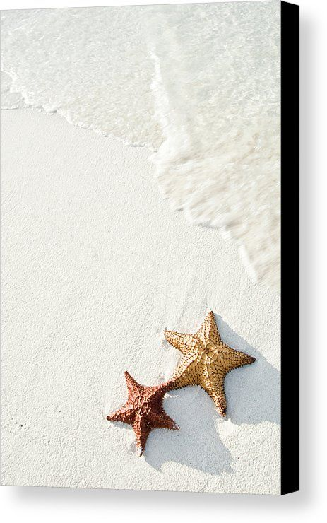 Starfish On Tropical Beach Canvas Print / Canvas Art by Mehmed Zelkovic