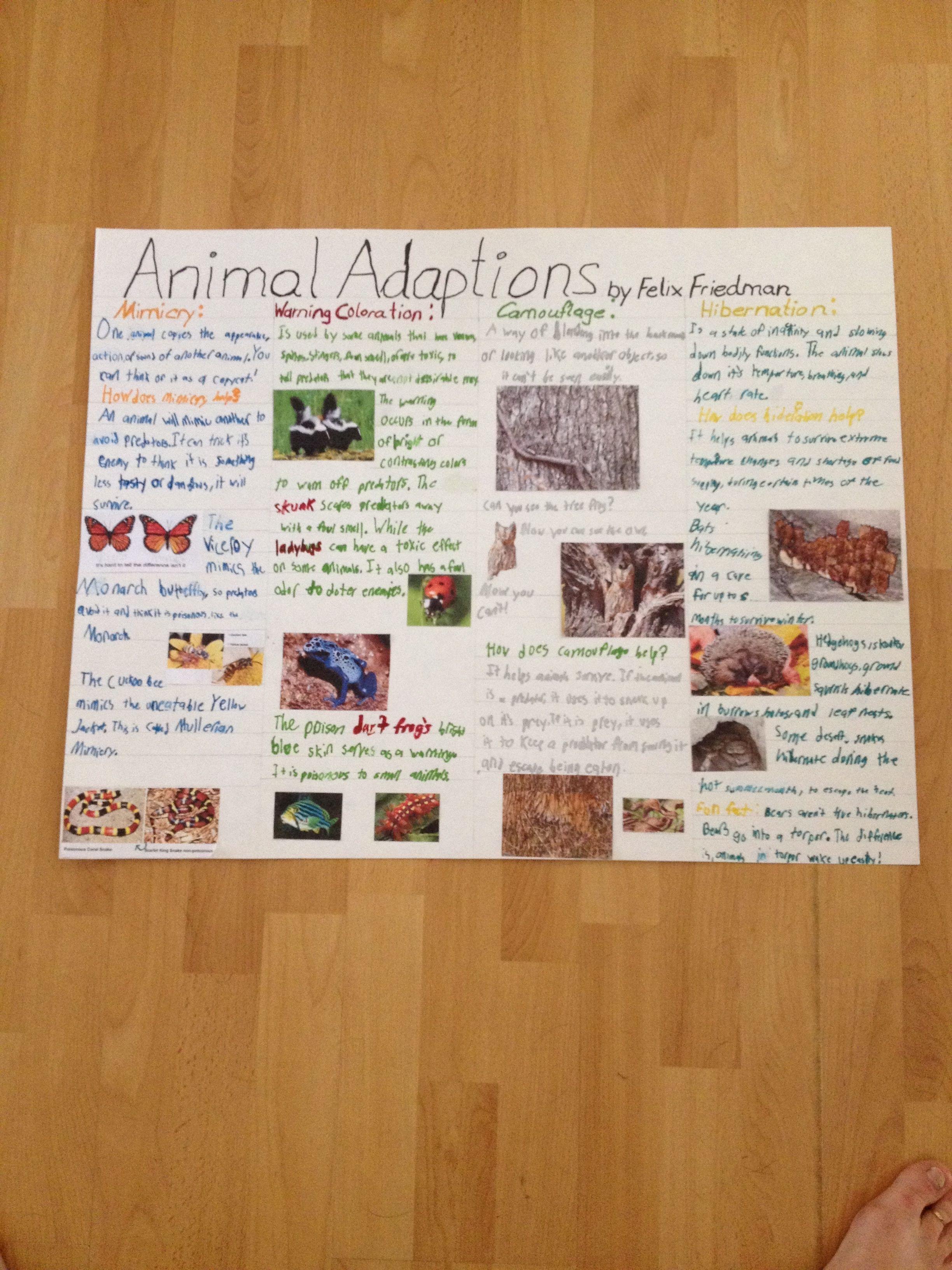4th Grade Animal Adaptation Poster Misspelled Adaptation