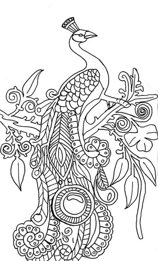 printable adult coloring pages paisley - Google Search | coloring ...