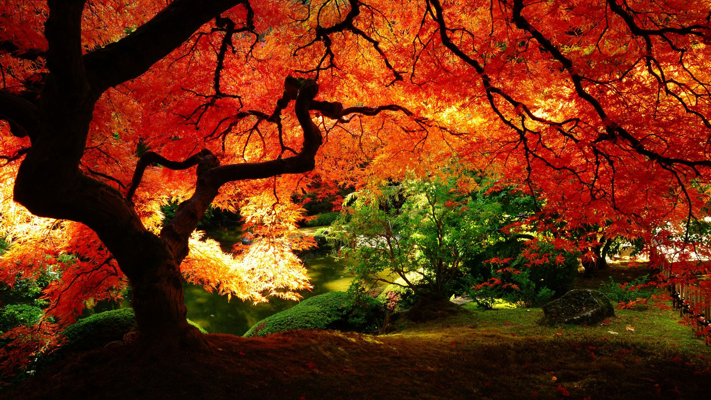 Amazing Fall Scenery Wide Wallpaper 2400x1350px Japanese
