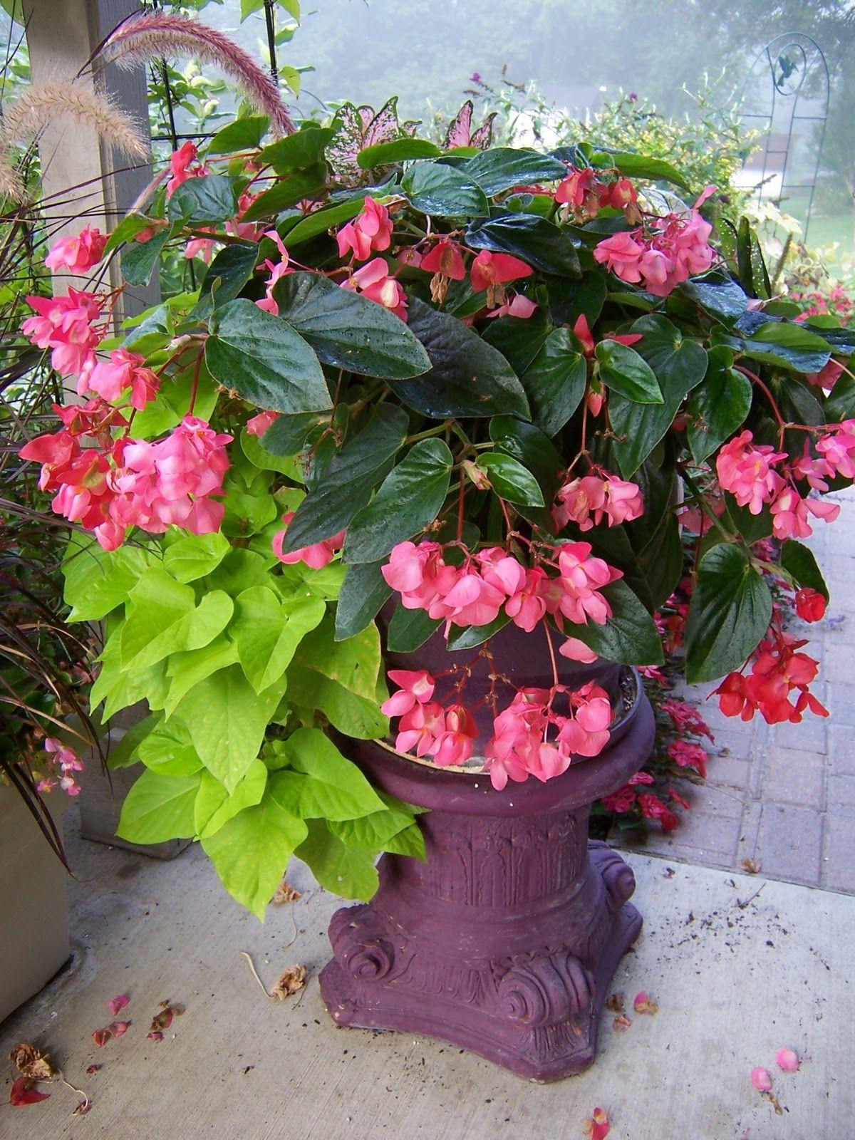 Container gardening ideas for full sun - Garden Ideas Create A Full Sun