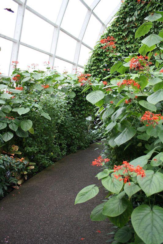 2739b0a779b58de746154ae83be29357 - St Louis Botanical Gardens Butterfly House