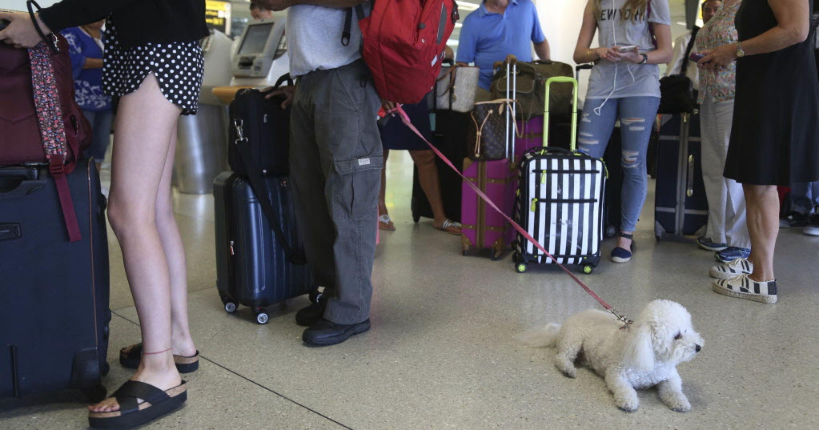 Delta tightens leash on comfort animals on flights