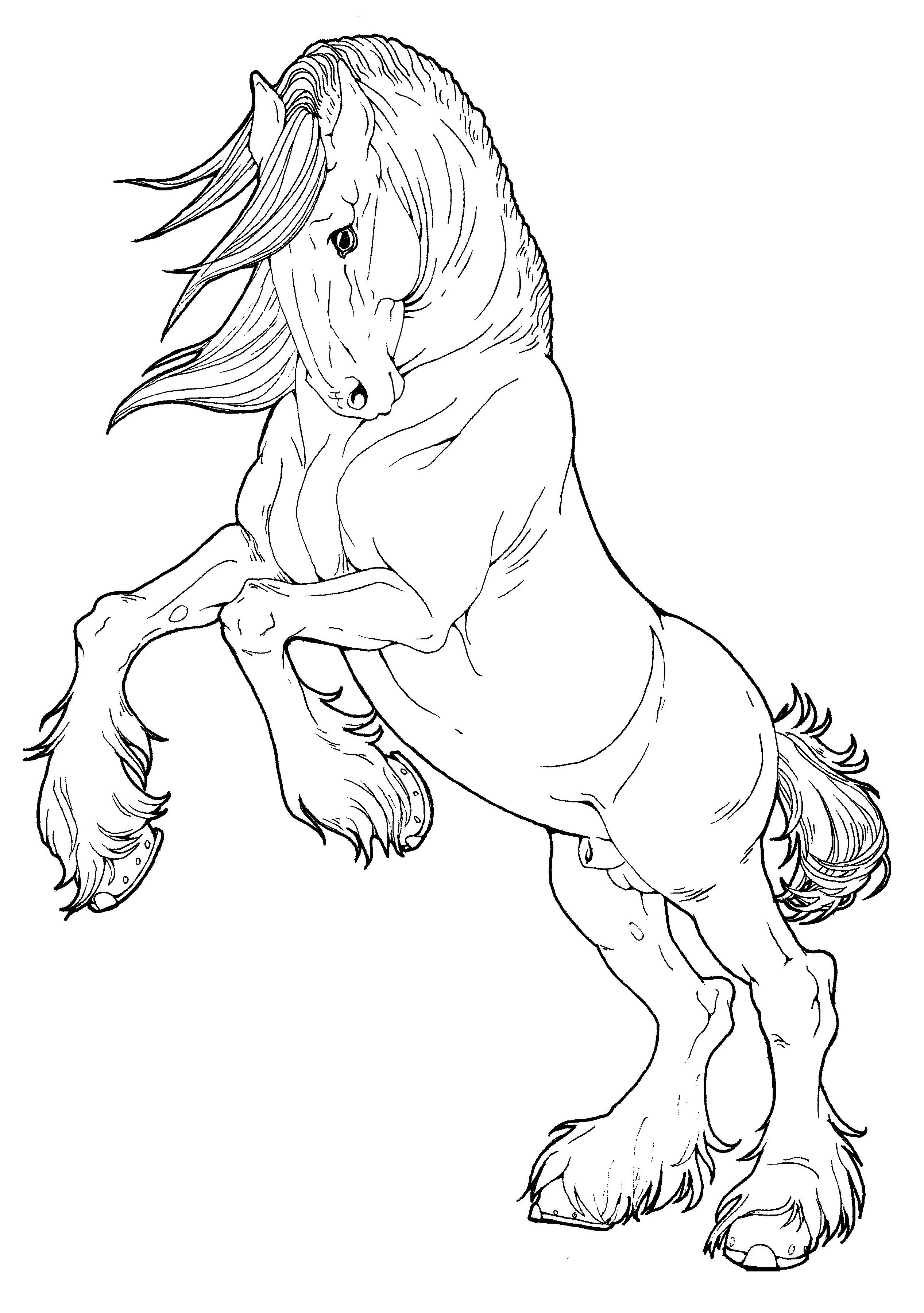 Horse Coloring Book In