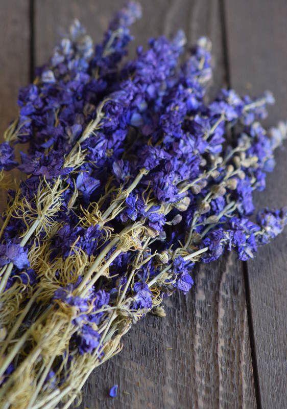 Dried Dark Blue Larkspur Flowers For Sale | Dried Delphinium | Dried ...