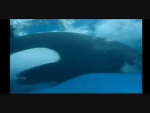 SeaWorld Trainer Killed Dawn Brancheau Attack Cell Phone Video From