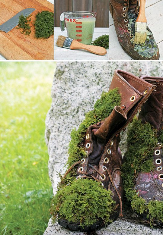 How To Grow Moss To Accent Your Garden | Gardening Tips | Clumps Of Moss In