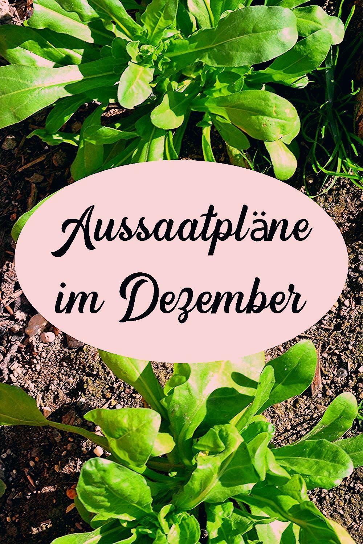 Photo of Aussaatpläne im Dezember – Viele Ernte und Lagermöglichkeiten – Haus und Beet