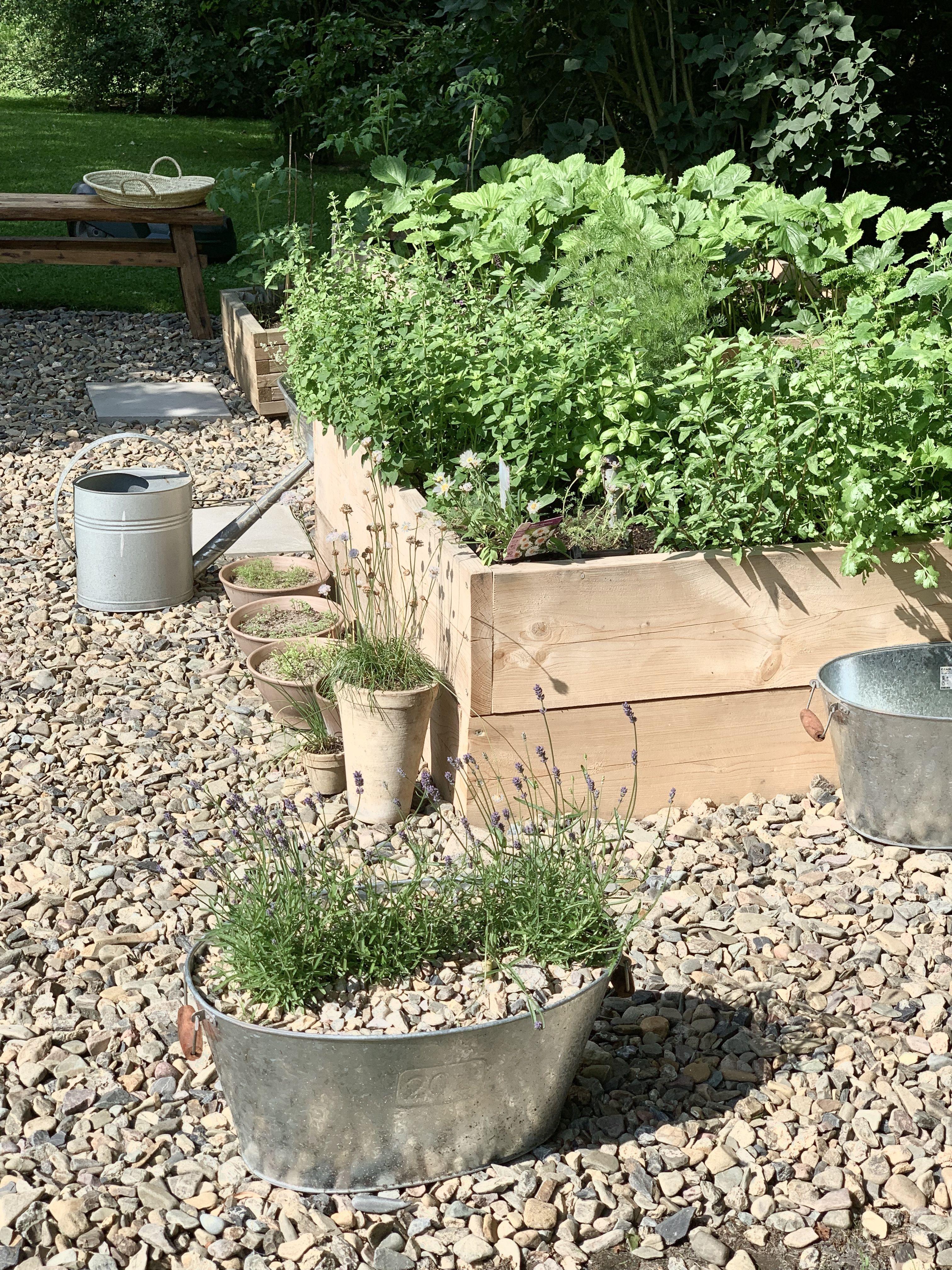 Hochbeet Anlegen In 2020 Bluhende Pflanzen Gartenprojekte Pflanzen