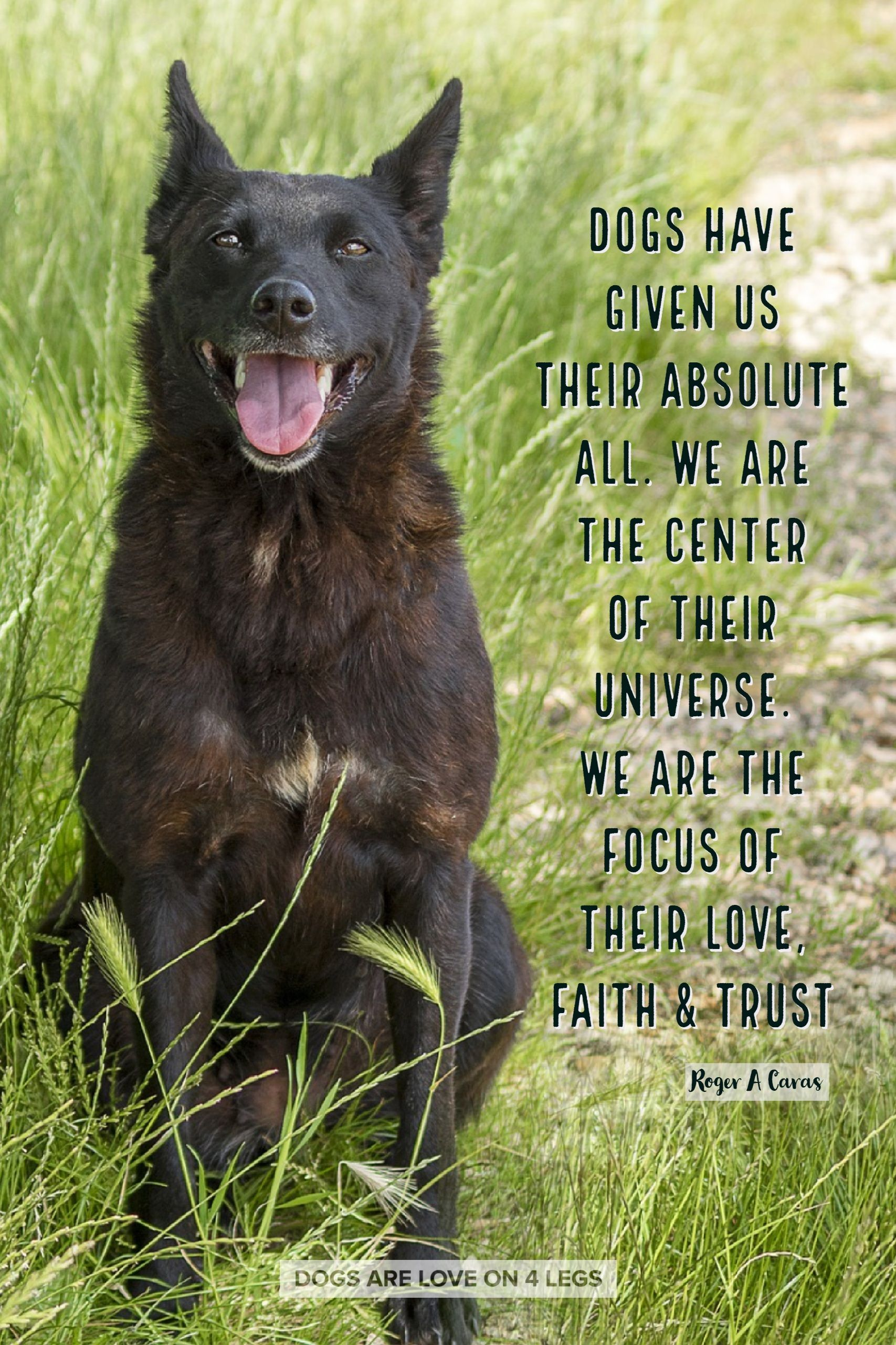 Dog Quote Dogs Have Given Us Their Absolute All