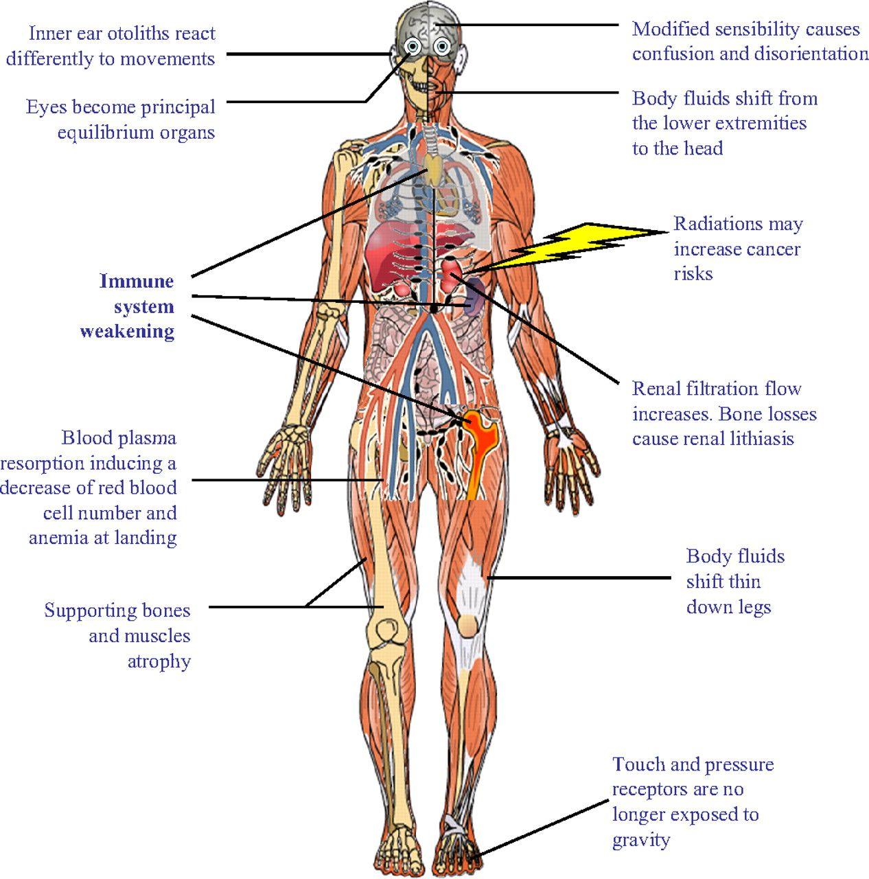 Massage Technique Diagram How To Identify Classes In Class Immune System School Pinterest