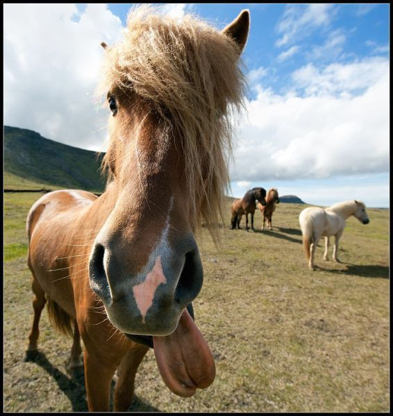 image cheval drole